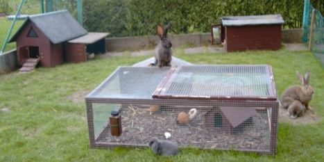 artgerechte kaninchen und meerschweinchenhaltung. Black Bedroom Furniture Sets. Home Design Ideas